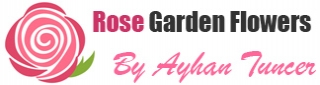 33 pink roses bouquet Logo