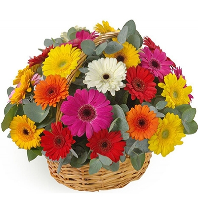 gerbera and chrysanthemum in basket Gerbera in Basket