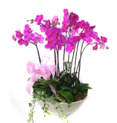 gerbera and chrysanthemum in basket 6 Branches Puple Orchids