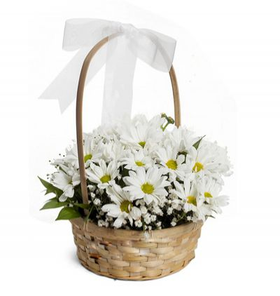 spring flowers in the buscket  Daisy in the bucket